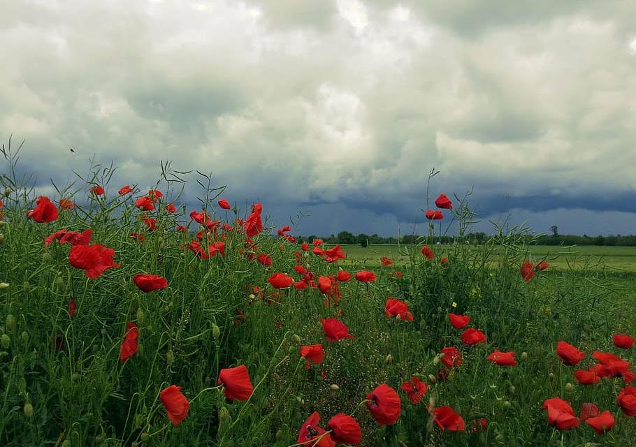 Днес ще бъде със значителна, средна и висока облачност, съобщават от НИМХ. Ще духа слаб до умерен вятър: в западната половина от страната от север-северозапад,...