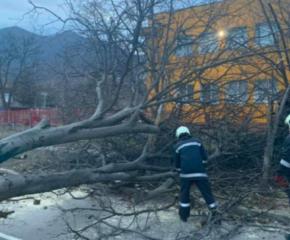 Вятър с бурни пориви създаде проблеми в Западна България