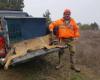Вълк нападнал животновъд в Горска поляна