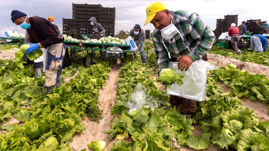 След като Европейската комисия призова за свободно движение на работници от критично значение, много българи са готови да заминат в чужбина като сезонни...