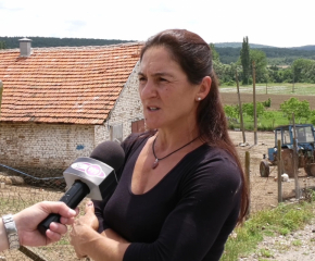 Вземат нови проби от стадото на Ана Петрова от Болярово