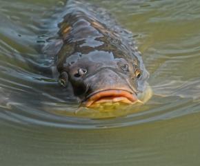 Ямбол и Сливен ще са домакини на национален рибен фестивал