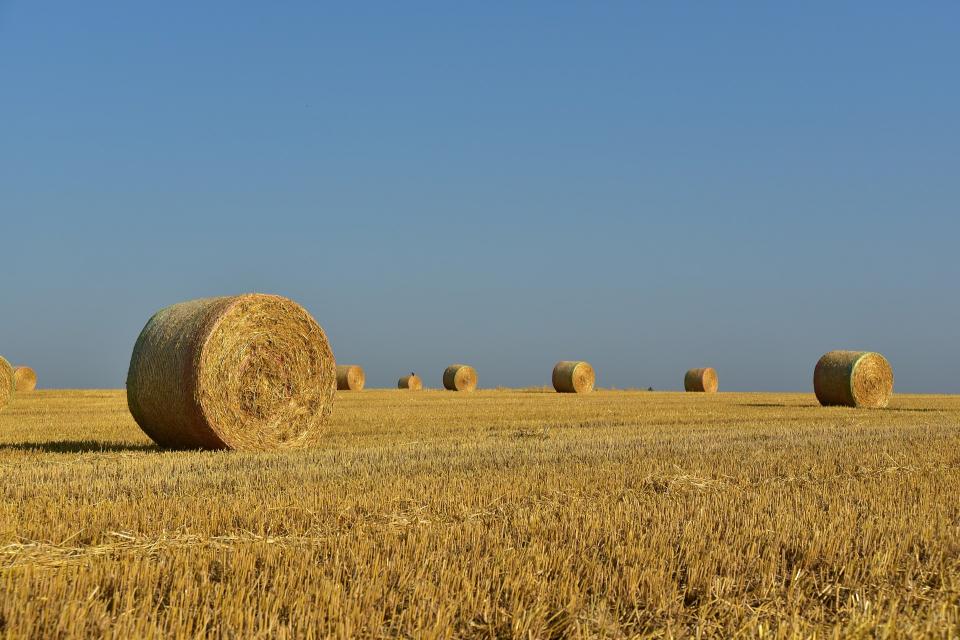 В Ямболска област жътвата на пшеницата приключи с прибрани 404 763 тона и среден добив 583 кг от декар. Това съобщи за БТА директорът на Областната дирекция...
