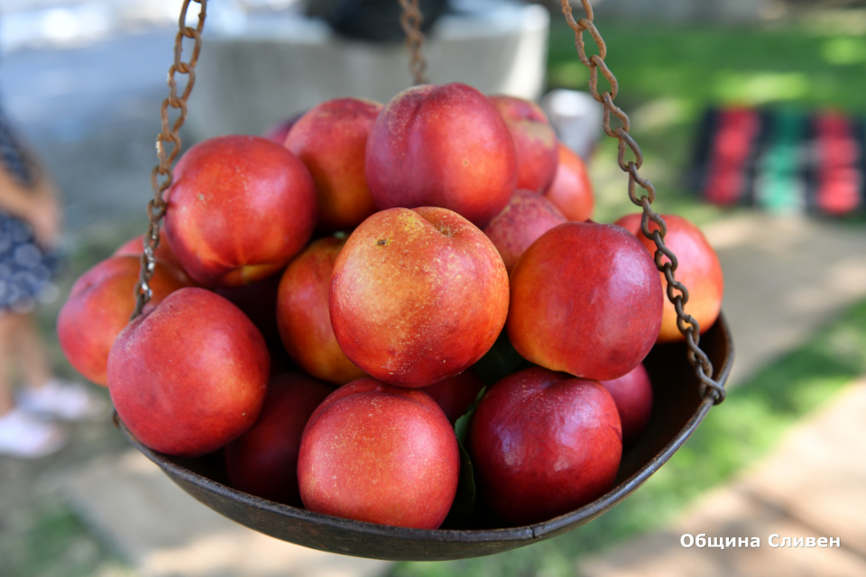 """За19-и път ежегодният празник """"Златна праскова"""" в село Гавраилово събра традиционни производители от цялата страна. Сред присъстващите на официалното..."""