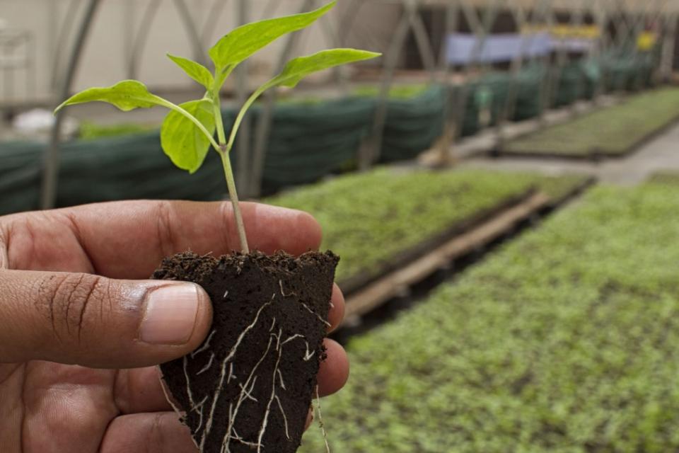 За първи път в България ще бъде отбелязан Европейският ден на биологичното земеделие. Последните данни на Евростат сочат, че страната ни е в дъното на...