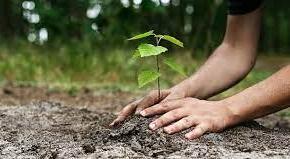 За Седмицата на гората от ДГС-Сливен засадиха дръвчета и направиха кът за отдих