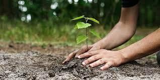 Служители от Държавното горско стопанство в Сливен засадиха дръвчета по пътя Сливен - Бяла, послучай професионалния си празник - Седмицата на гората /5-11...