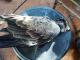 Заловиха бракониер, убил десетки застрашени от изчезване птици и бозайници