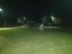 Започва пръскане на тревните площи срещу кърлежи в Ямбол