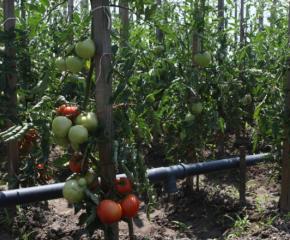 Започват теренни проверки на площи със зеленчуци