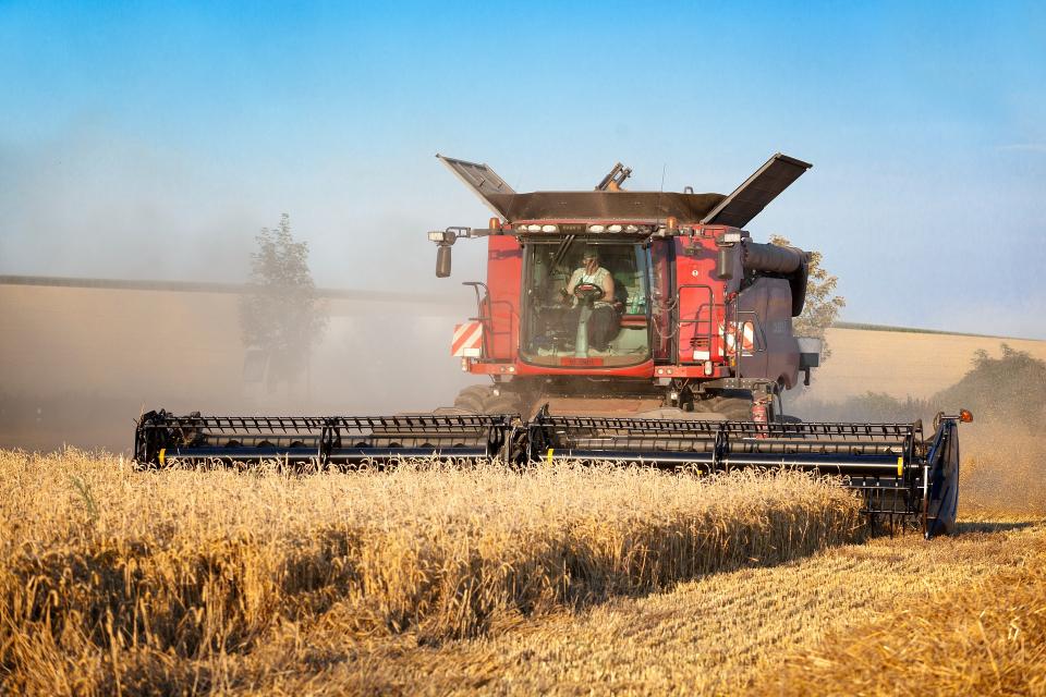 Жътвата на ечемика и пшеницата закъснява заради обилните дъждове през последния месец. Прогнозите са закъснението да е от 7 до 15 дни за всяка от културите,...