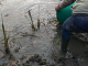 Зарибяват язовири с парите от риболовни билети