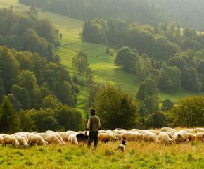Земеделските стопани да проверят дали площите им са включени в проекта за подпомагане