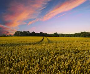 Земеделците вече могат да кандидатстват за извънредните COVID мерки