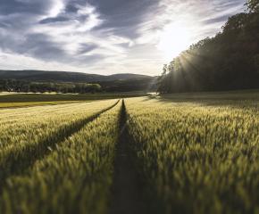 Земеделците започват подаването на заявления за компенсиране на загубите от природни бедствия