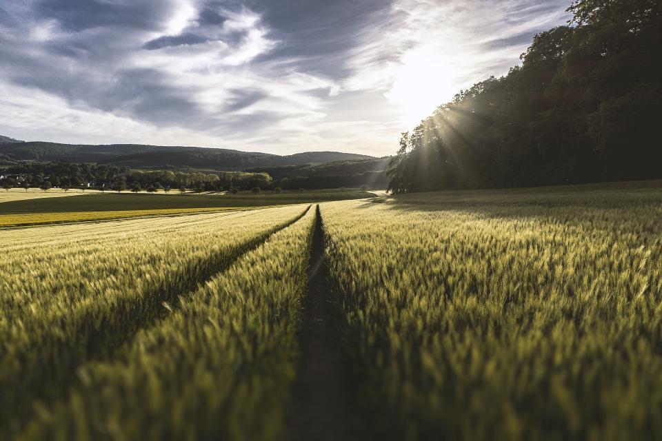 От днес започва прием на заявления за компенсиране на загубите на земеделците от природни бедствия през 2020 г. Схемата за държавна помощ има бюджет от...