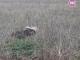 Животински трупове гният край къщи в с. Зимница (видео)