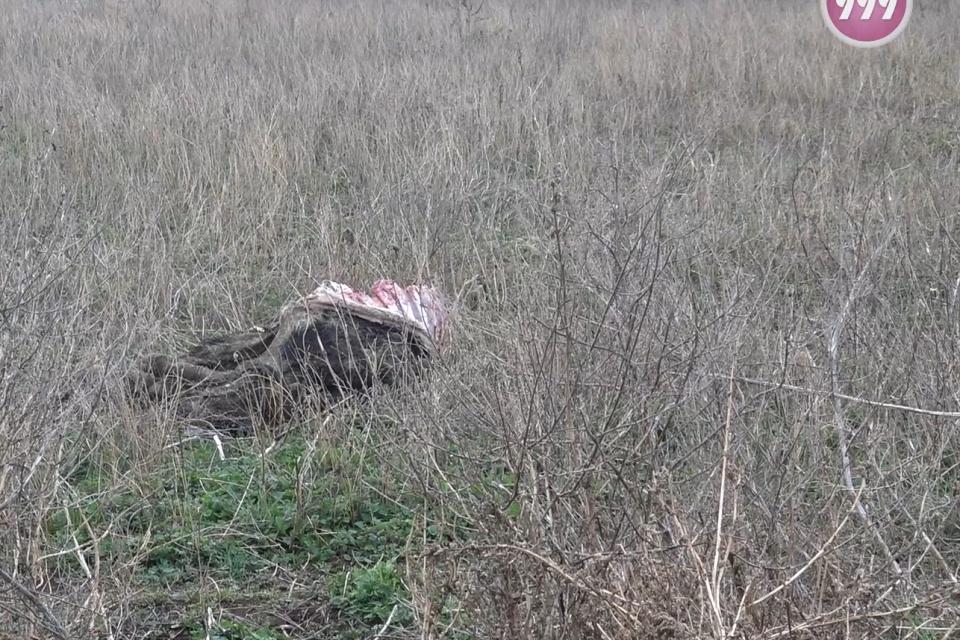 Животински кости и разлагащи се трупове край къщите на живеещи в село Зимница. За това алармираха в неделния ден слушатели на 999 и ни изпратиха снимки...
