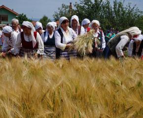 """Жътвената кампания в община """"Тунджа"""" беше открита на Спасовден (Снимки)"""