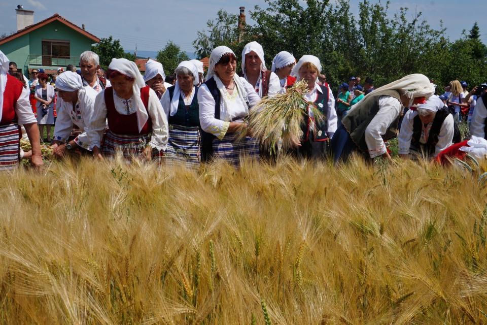 """На светъл ден - Възнесение Господне, беше дадено официалното начало на жътвената кампания в община """"Тунджа"""". За девета поредна година то се организира..."""