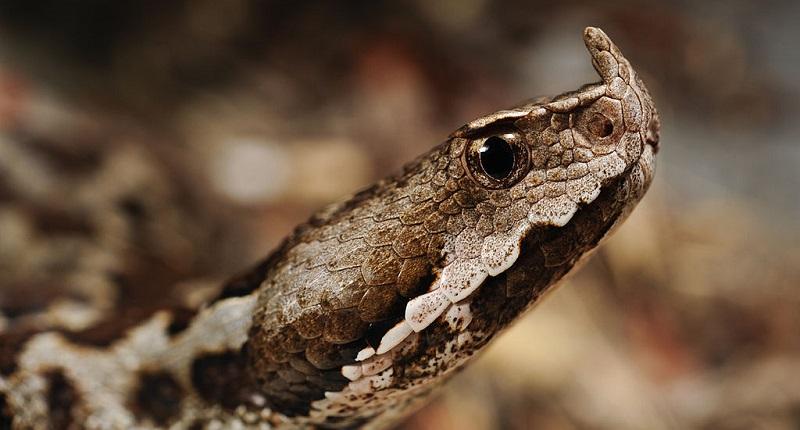 Със затоплянето на времето започва сезонът на змиите. Влечугите излизат на припек с една единствена цел - да акумулират топлина от слънцето. Телефонът...