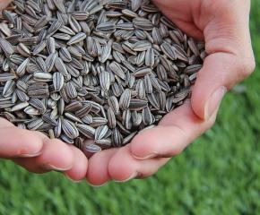 Зърнопроизводителите декларират до 30 ноември произведената реколта