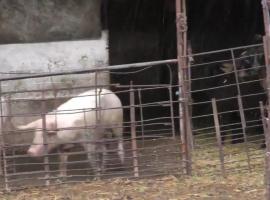 Животновъди: Притискат ни с документи с невярно съдържание